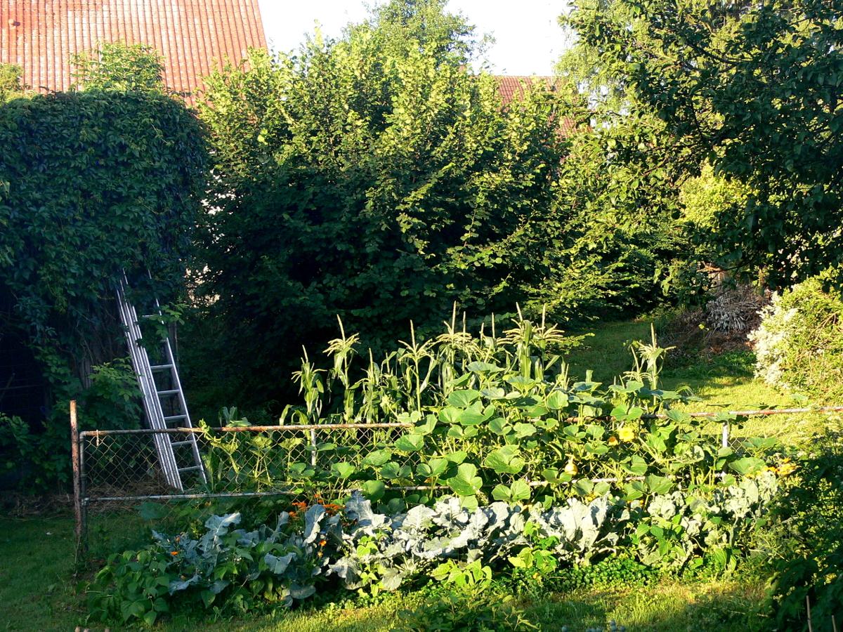 Gut Gartengstaltung Mit Gemüse